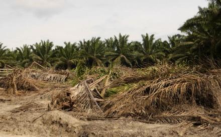 Land GrabbingIndonesien I